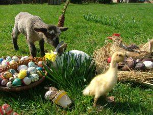 Symboly Velikonoc  Velikonoční beránek, Velikonoční vajíčko, Velikonoční zajíček